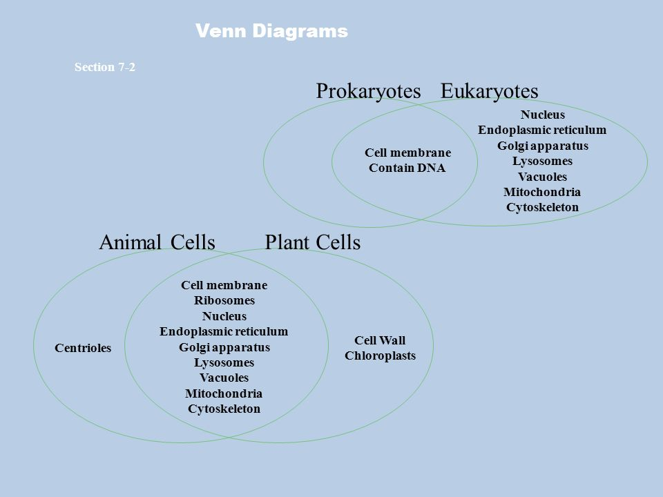 Cell unit learning goal 2 describe cell organelles and their 34 endoplasmic reticulum endoplasmic reticulum venn diagrams ccuart Images