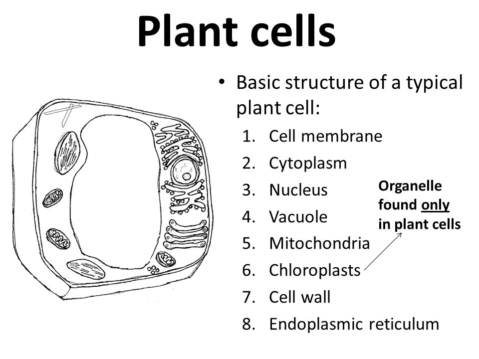Cells Objectives Label The Different Parts Of The Cell