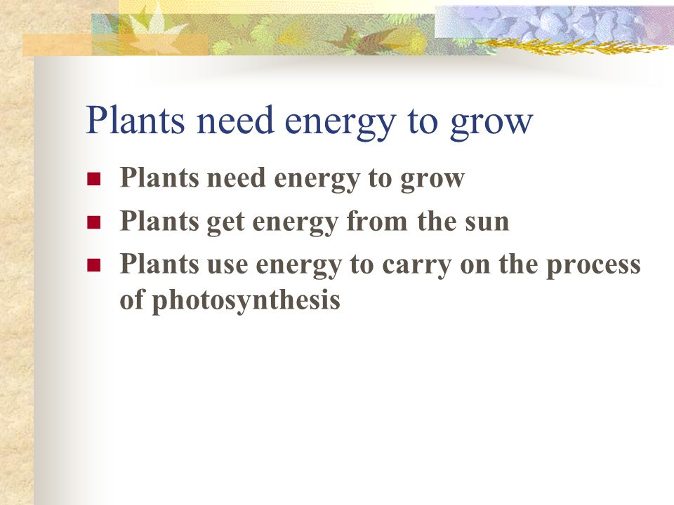 Plants need energy to grow