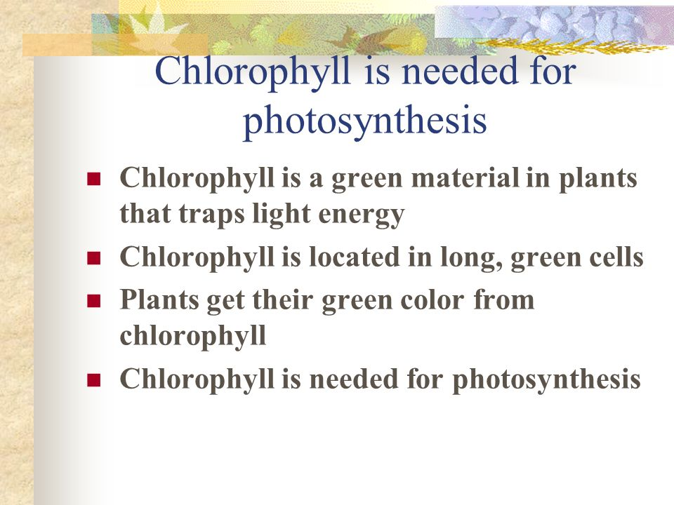 Chlorophyll is needed for photosynthesis