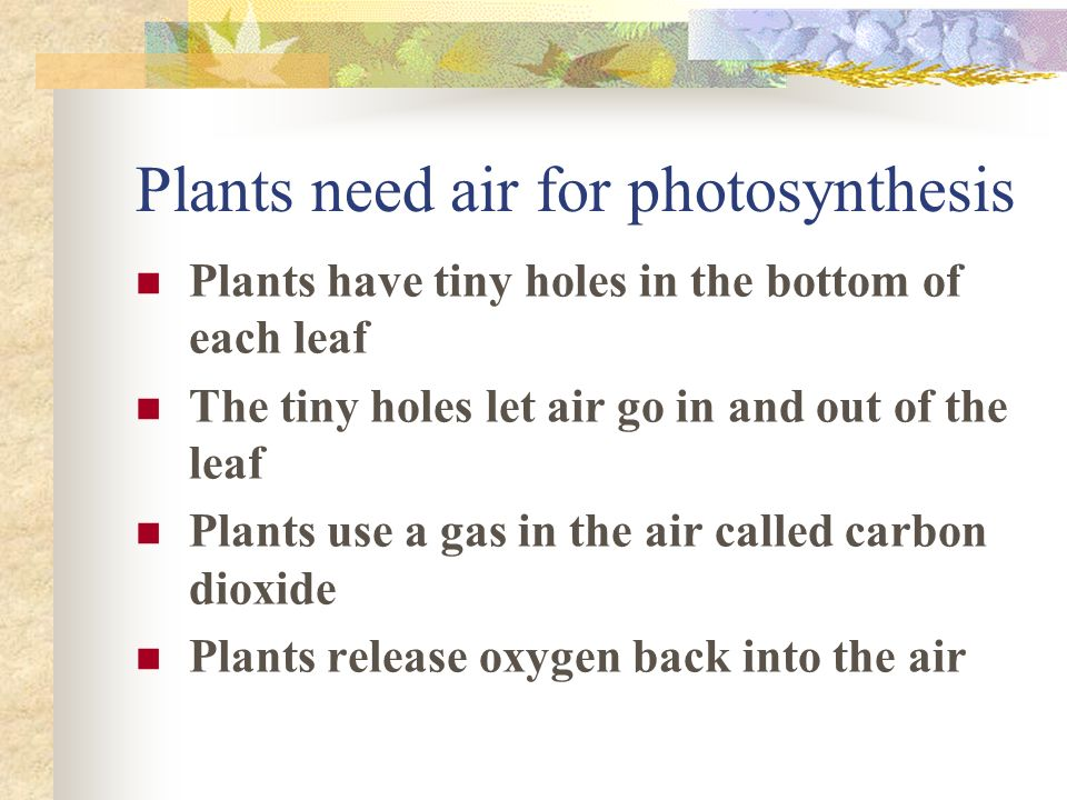 Plants need air for photosynthesis