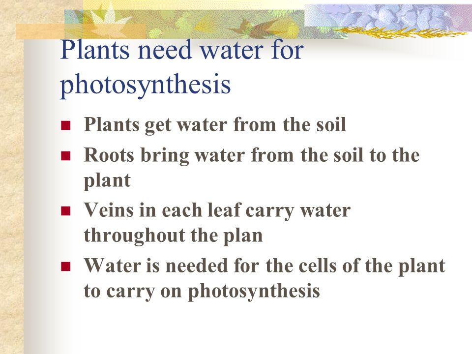 Plants need water for photosynthesis