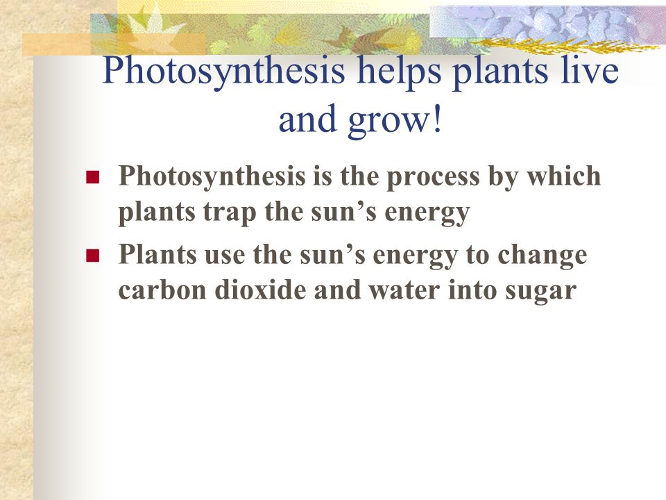 Photosynthesis helps plants live and grow!