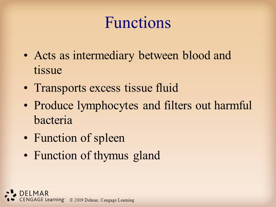 The Lymphatic System and Immunity - ppt video online download