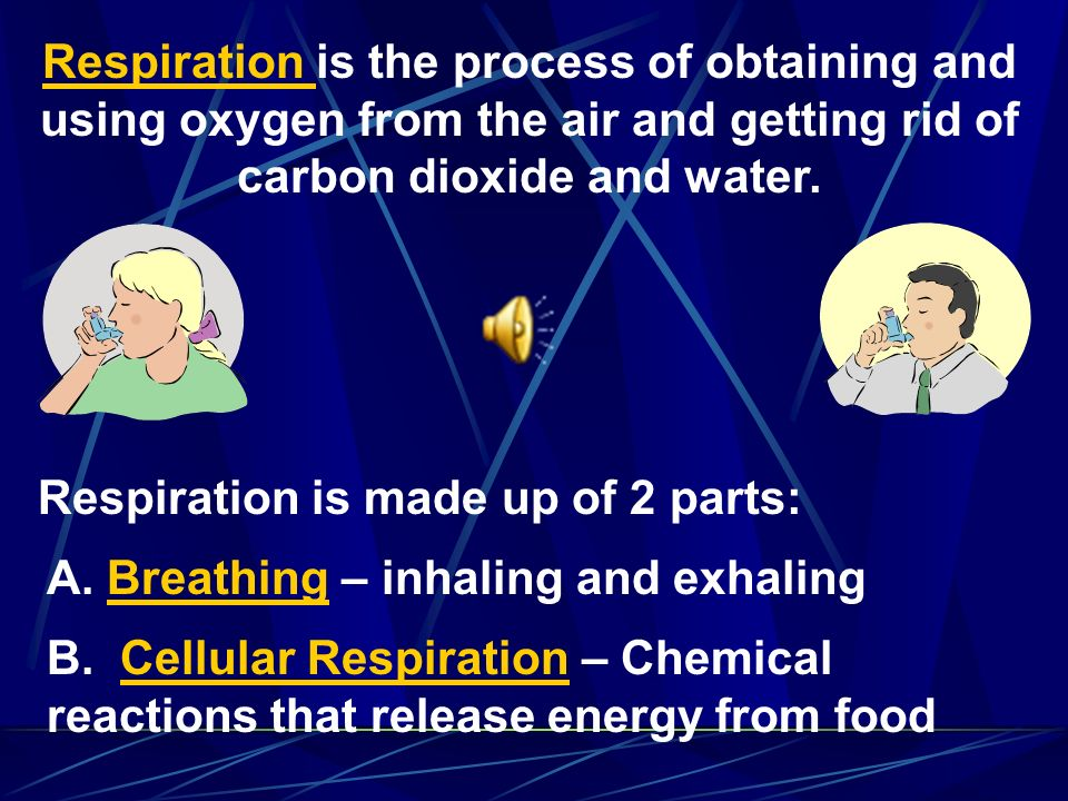 Respiration is the process of obtaining and using oxygen from the air and getting rid of carbon dioxide and water.