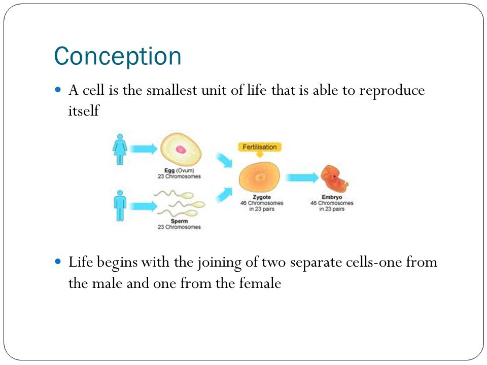 Chapter 4 Pregnancy Conception Ppt Video Online Download