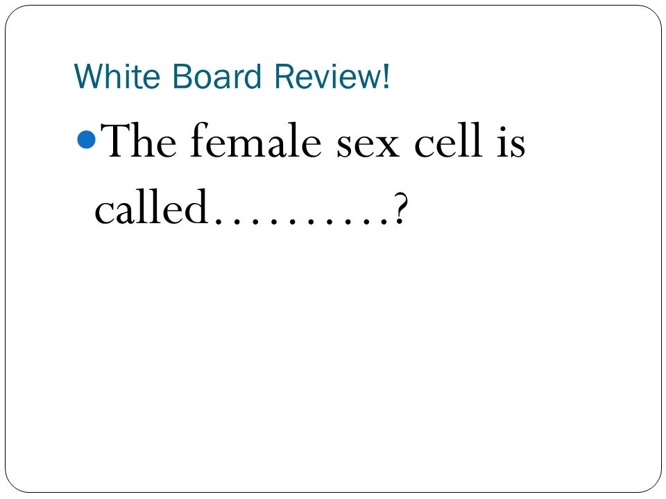 What is the female sex cell called retro
