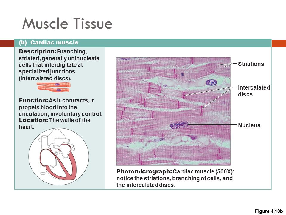 Anatomy Physiology Tissue The Living Fabric Ppt Download