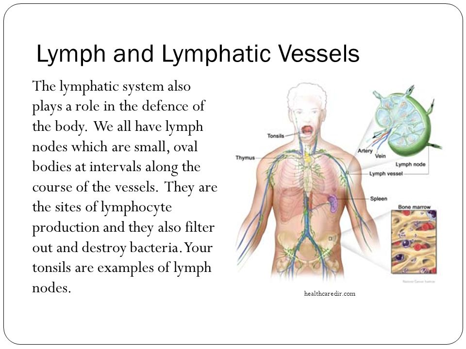 Lymph and Lymphatic Vessels