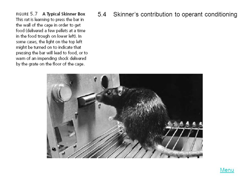 LO 5.4 Skinner's contribution to operant conditioning