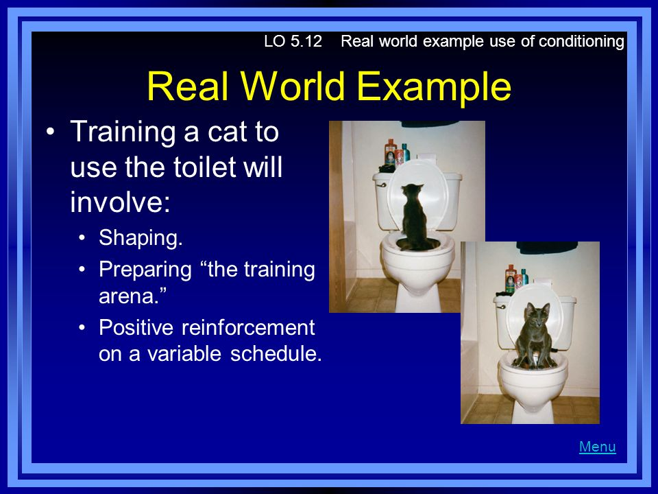 Real World Example Training a cat to use the toilet will involve: