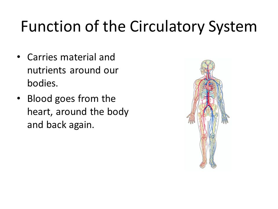 Circulatory System 7th Grade Science Ppt Video Online Download