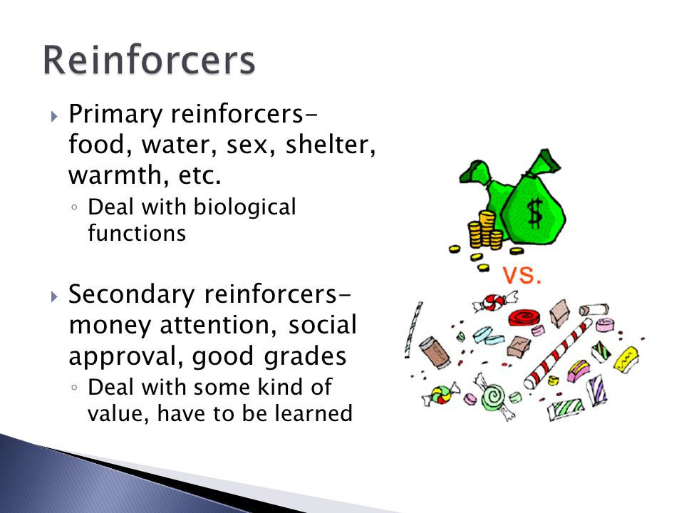 what is a primary reinforcer