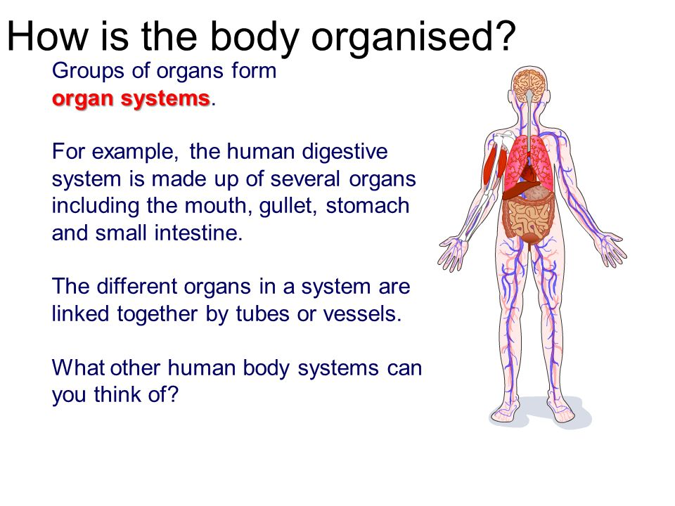 Cells Organs Tissues Lessons Ppt Video Online Download