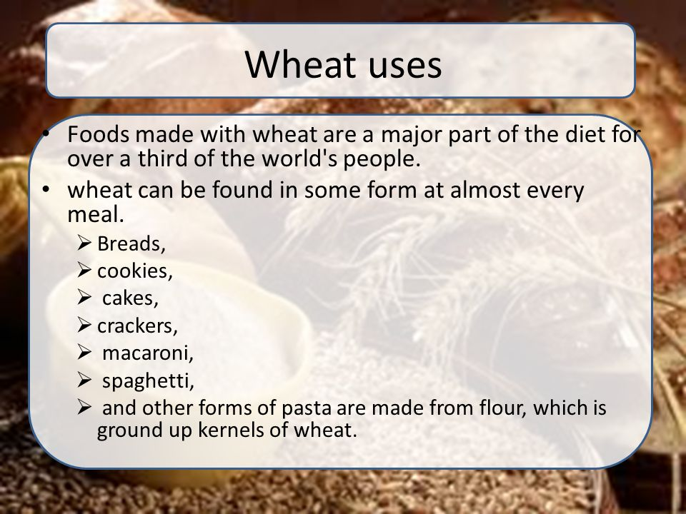 Production technology of wheat - ppt video online download