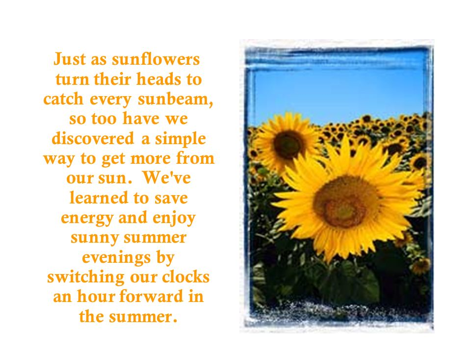 Just as sunflowers turn their heads to catch every sunbeam, so too have we discovered a simple way to get more from our sun.