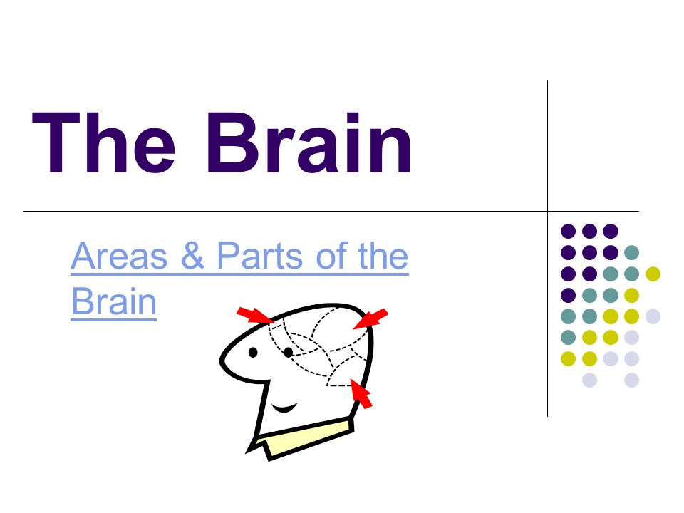 Areas & Parts of the Brain