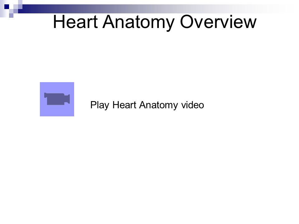 Cardiovascular System- The Heart Anatomy Chap ppt video online download