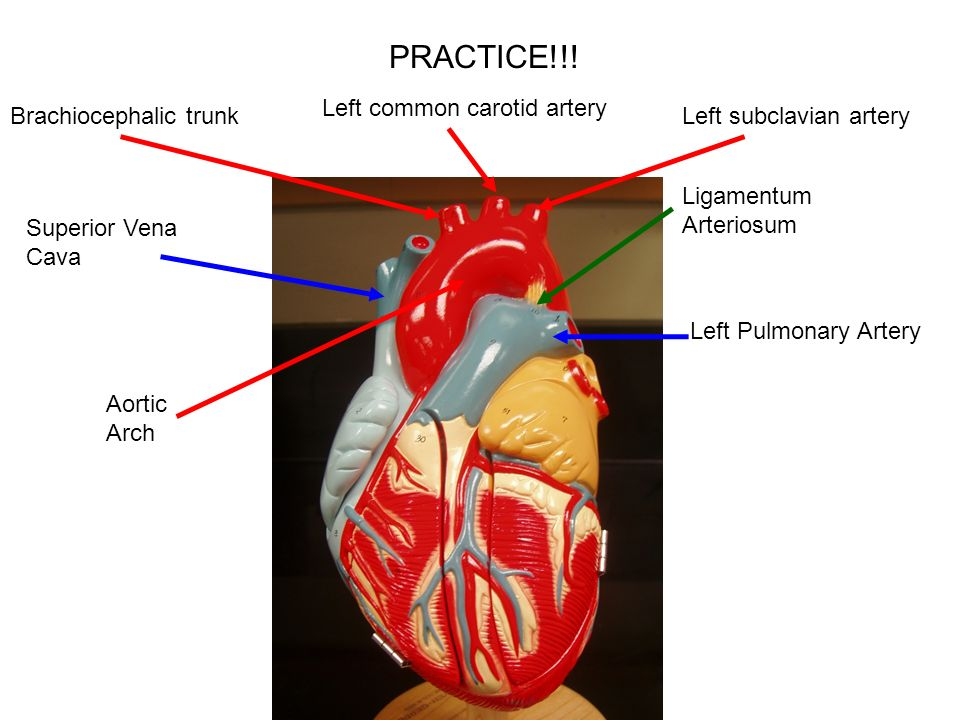 Heart models ppt video online download 6 practice ccuart Gallery