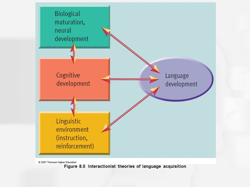 Chapter 8 language and thought ppt video online download 13 figure 85 interactionist theories of language acquisition ccuart Gallery