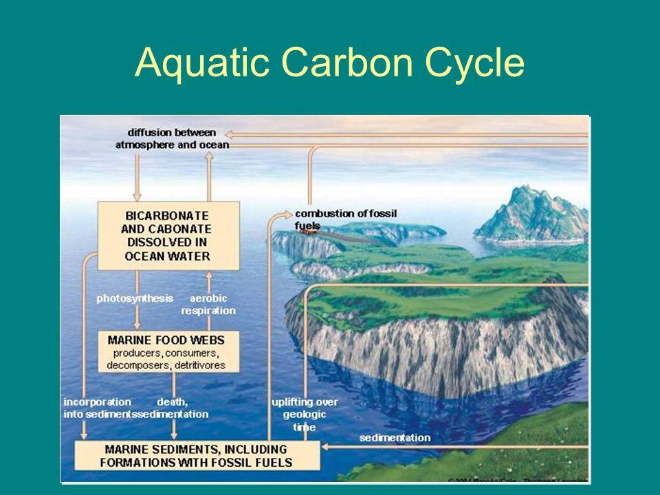 Cycling of matter ib syllabus ch ppt download 17 aquatic carbon cycle ccuart Choice Image