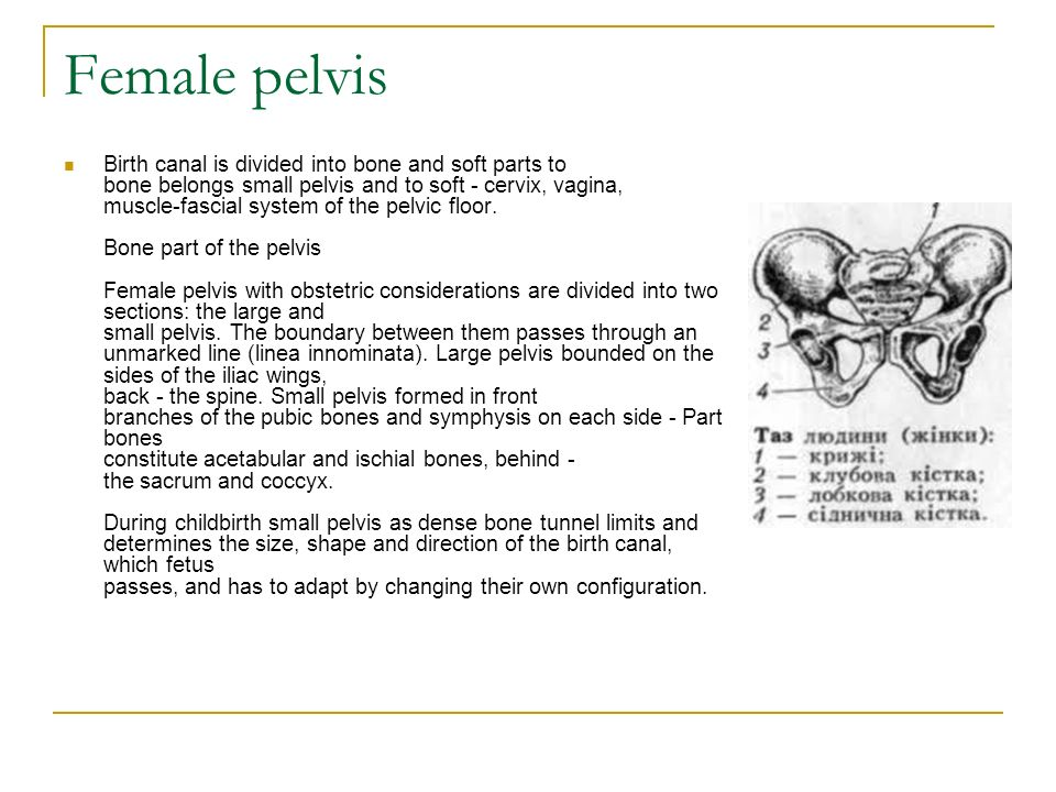 Female Pelvis Fetus As The Object Of Labor Obstetric Terminology