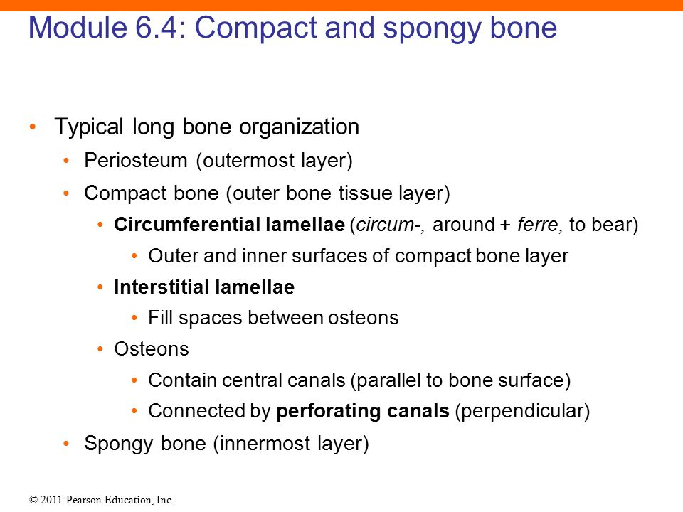 6 Osseous Tissue And Bone Structure Ppt Download