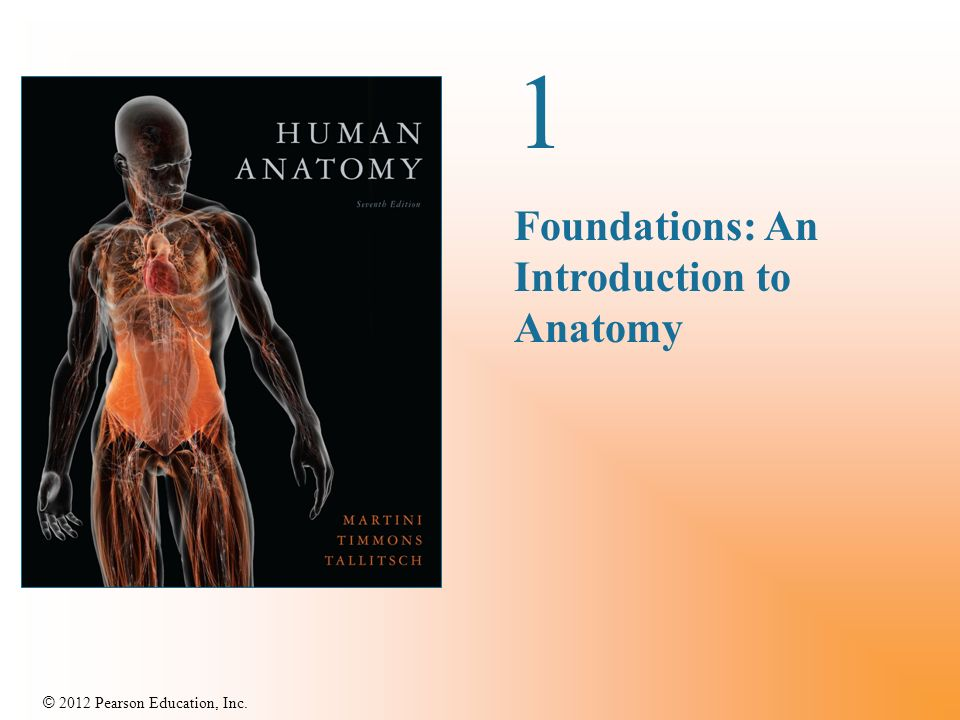 1 Foundations An Introduction To Anatomy Ppt Download