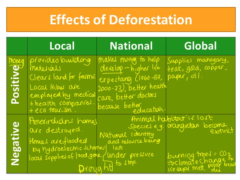 what are the negative effects of deforestation
