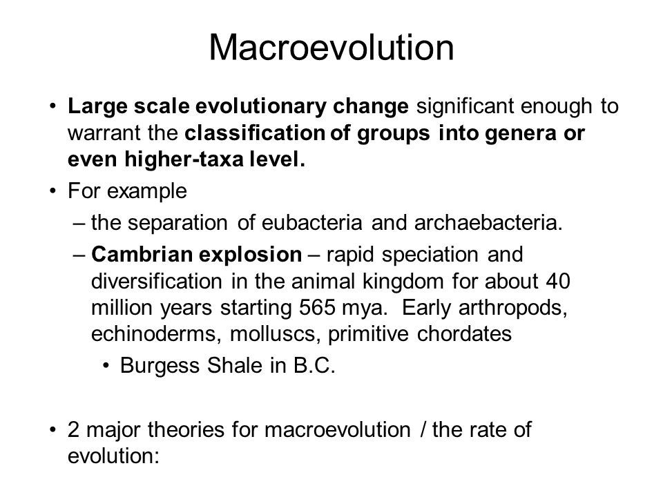 Examples Of Macroevolution Images Example Cover Letter For Resume
