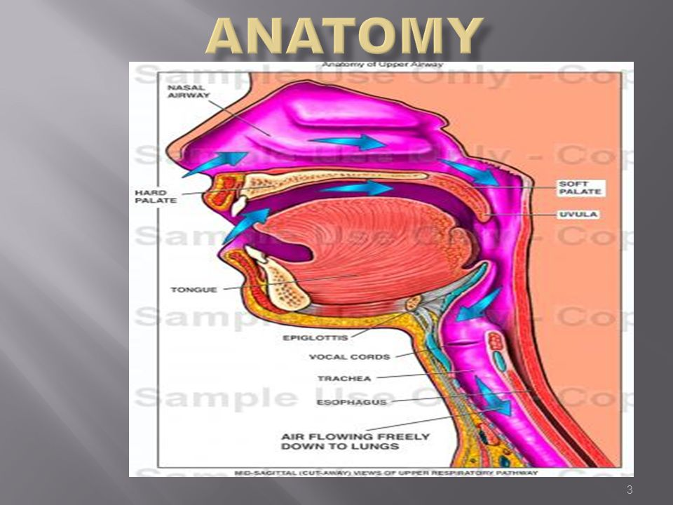 Intubation and Anatomy of the Airway - ppt video online download