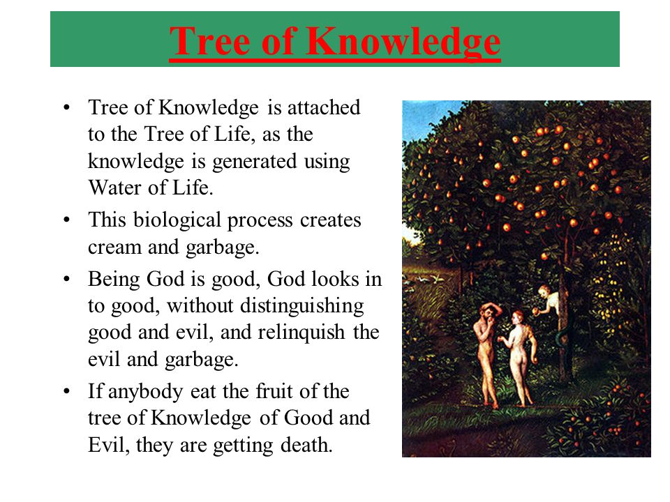 Tree of Knowledge Tree of Knowledge is attached to the Tree of Life, as the knowledge is generated using Water of Life.