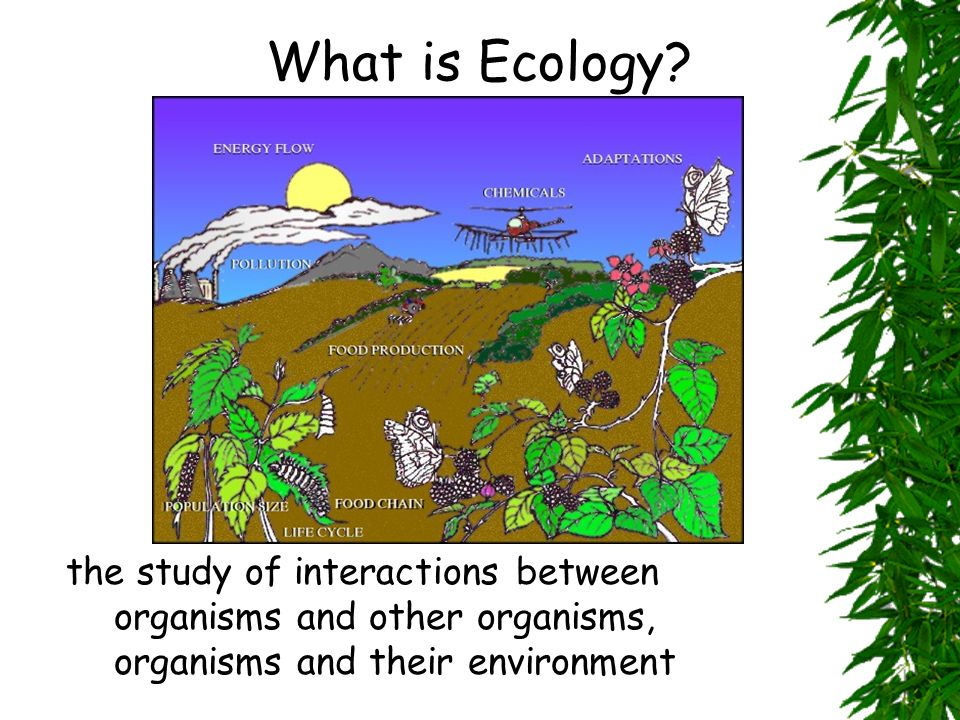 What is Ecology the study of interactions between