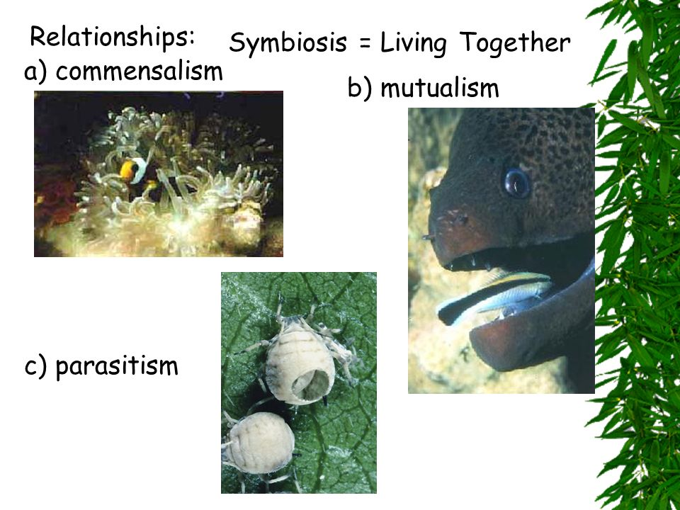 Relationships: Symbiosis = Living Together a) commensalism b) mutualism c) parasitism