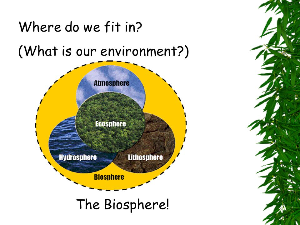 Where do we fit in (What is our environment ) The Biosphere!