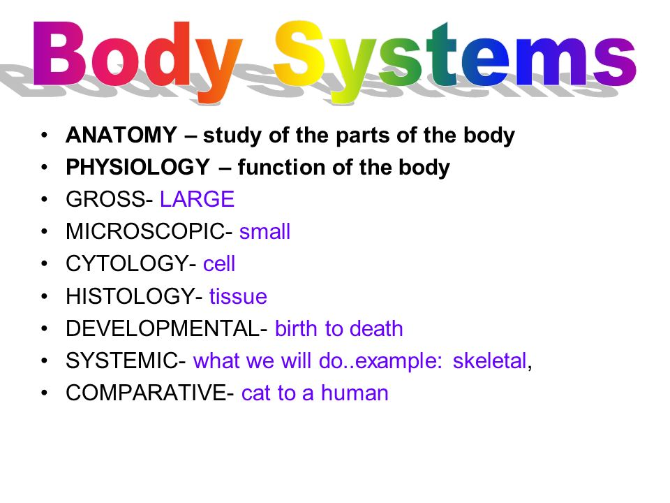Body Systems ANATOMY – study of the parts of the body