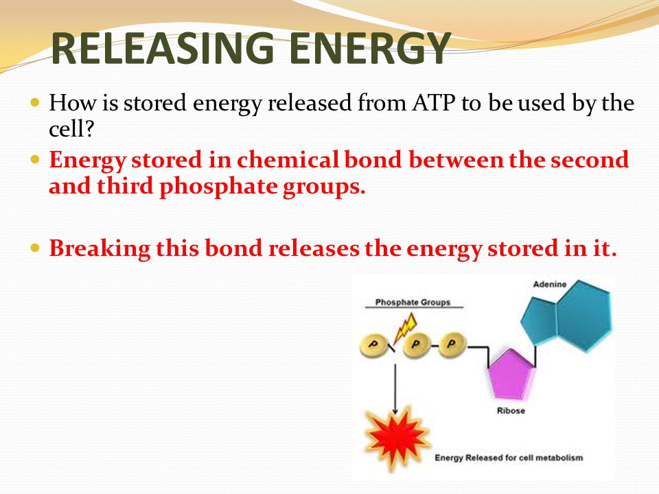 briefly outline the cycle by which energy is stored in and released from atp explain the importance  The hydrogen released is used in oxidative phosphorylation to provide energy to make atpthe reactions of krebs cycle do not make use of oxygenhowever,oxygen is required in the final stage(ie oxidative phosphorylation.