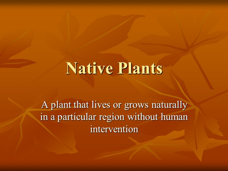 Native Plants A plant that lives or grows naturally in a particular region without human intervention.