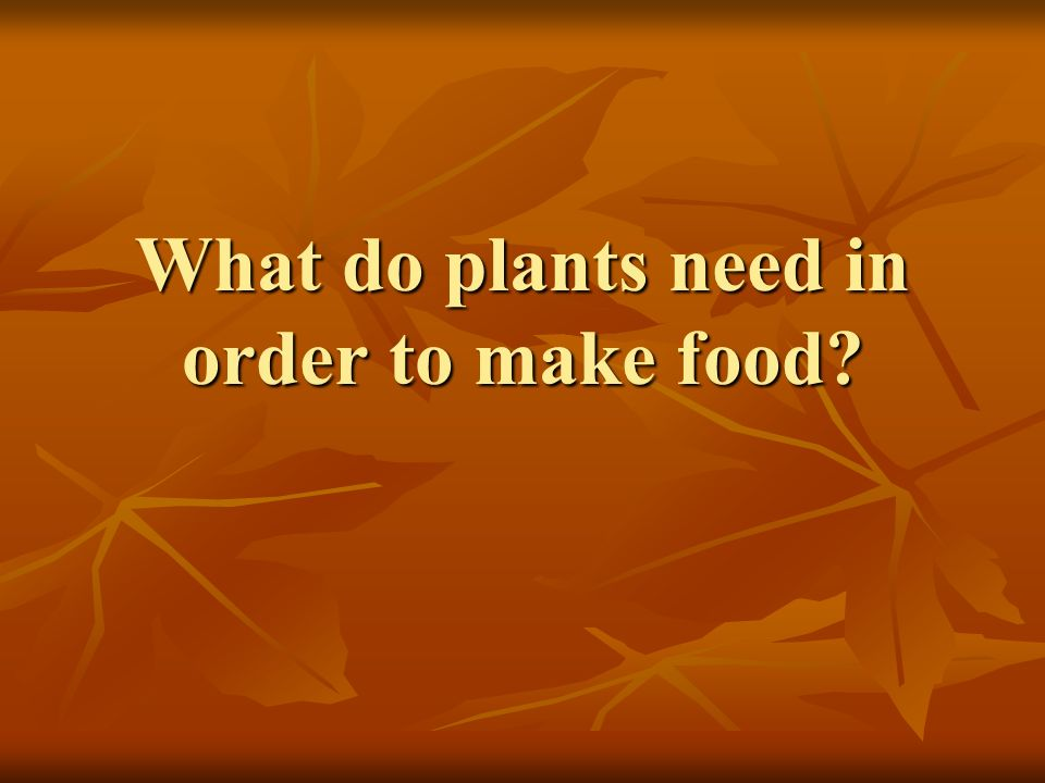 What do plants need in order to make food