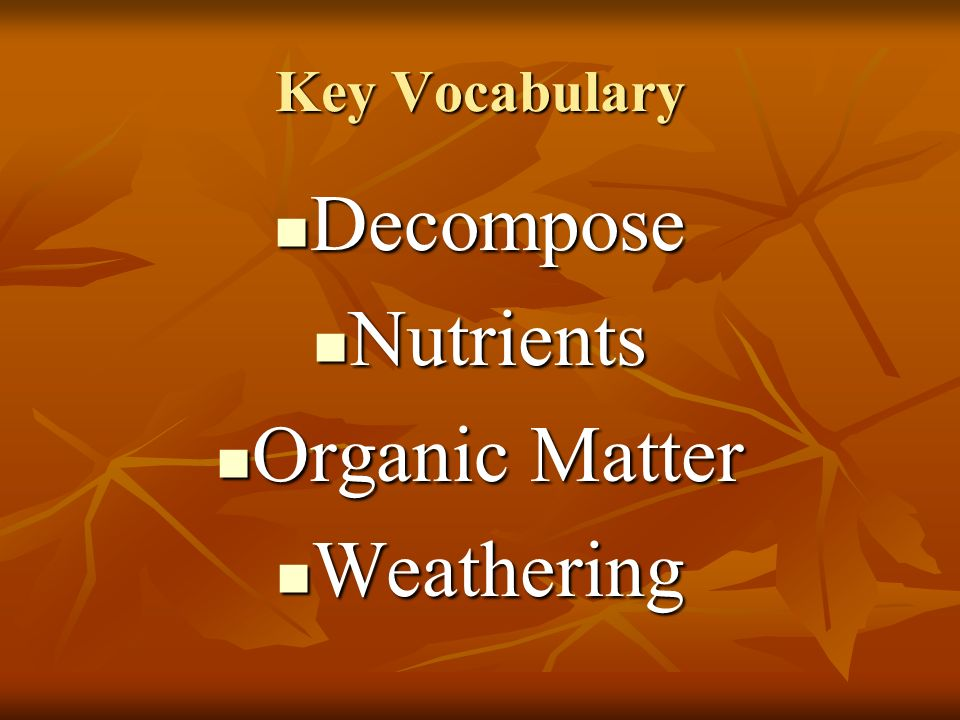 Key Vocabulary Decompose Nutrients Organic Matter Weathering