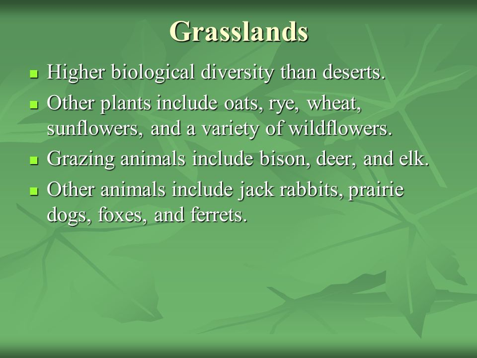 Grasslands Higher biological diversity than deserts.