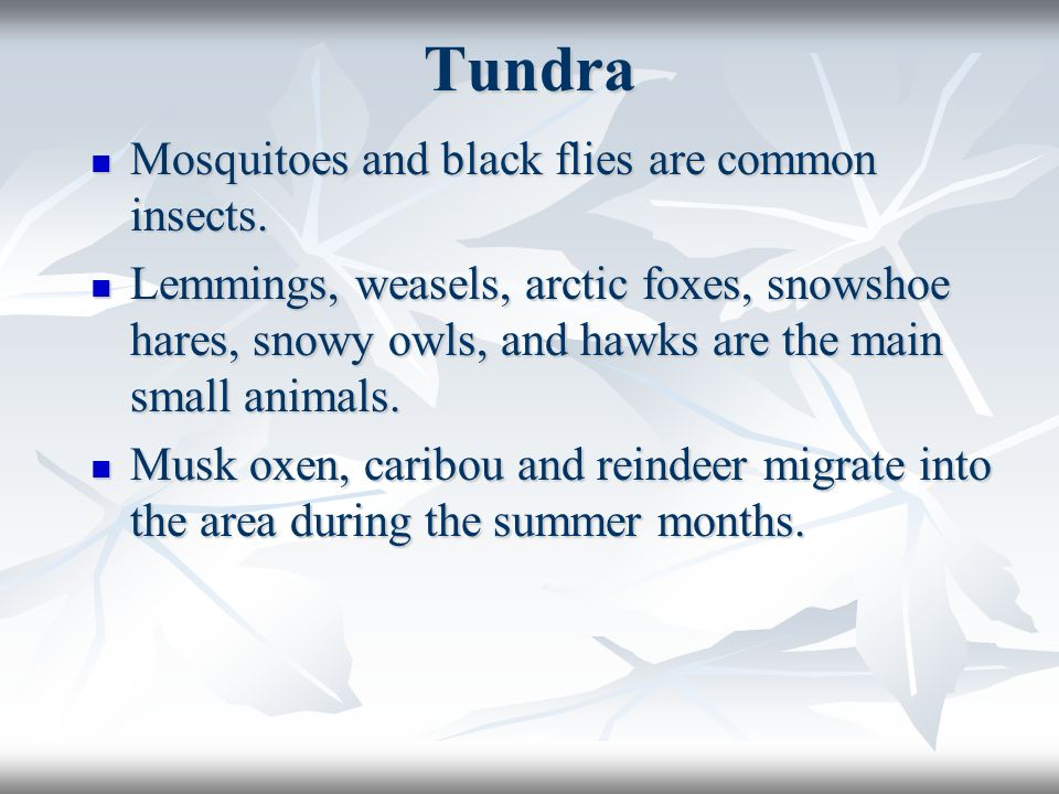 Tundra Mosquitoes and black flies are common insects.