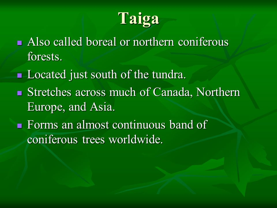 Taiga Also called boreal or northern coniferous forests.