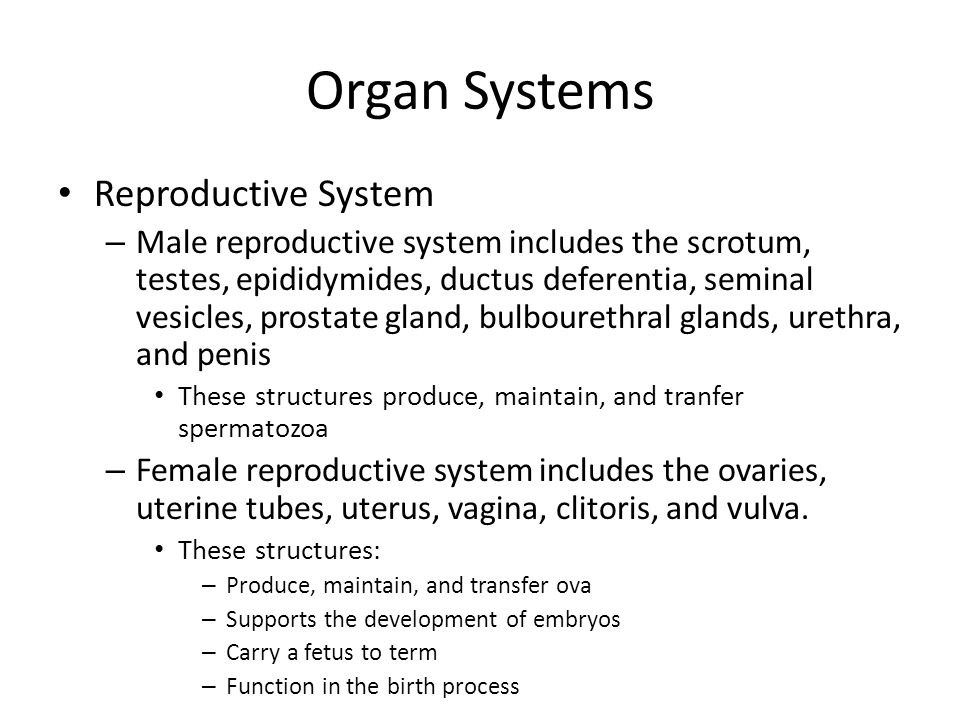 Organ Systems Reproductive System