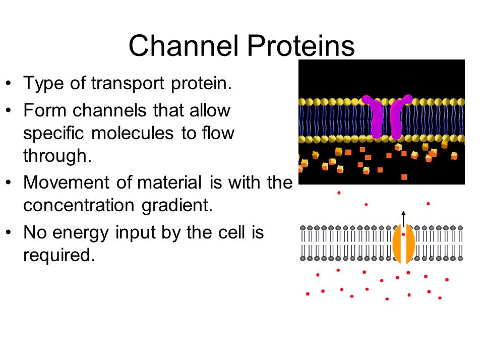 Channel Proteins Type of transport protein.