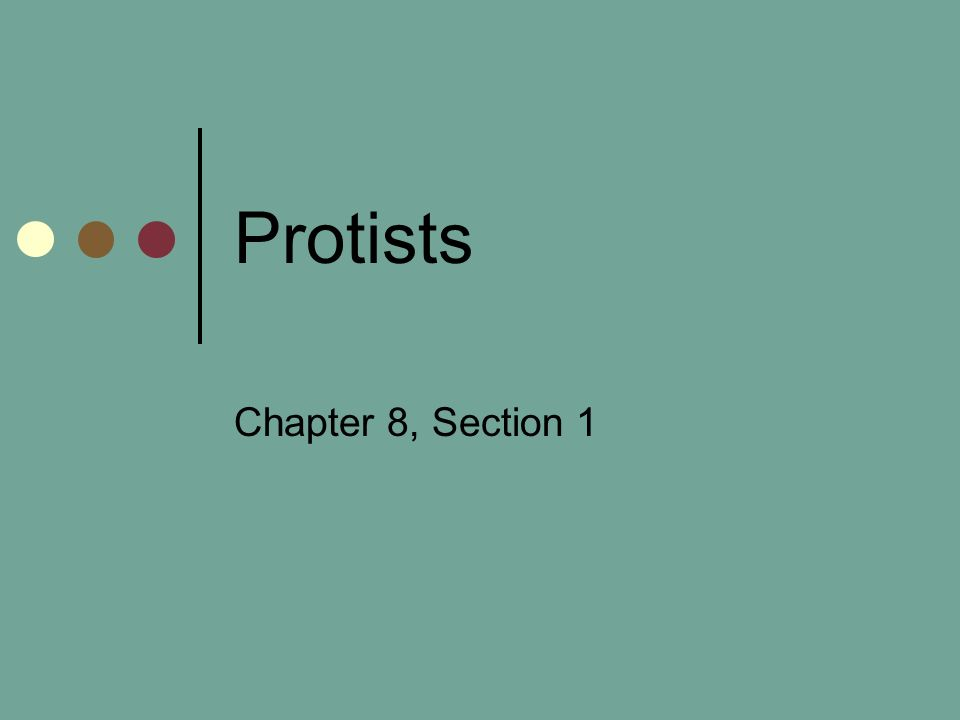 Protists Chapter 8, Section 1