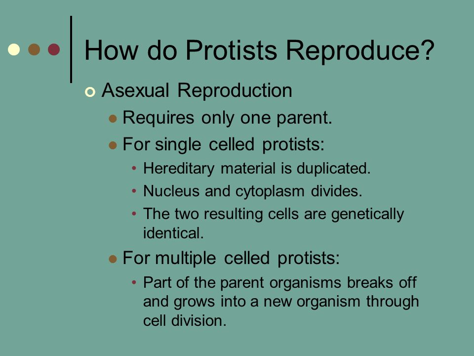 How do Protists Reproduce