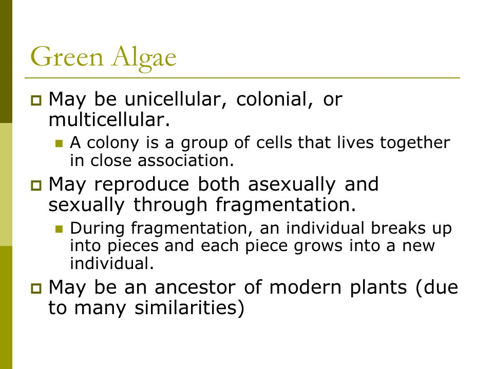 Green Algae May be unicellular, colonial, or multicellular.