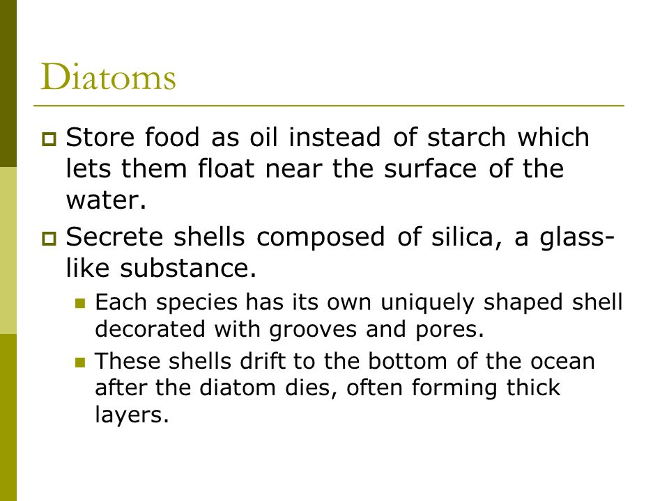 Diatoms Store food as oil instead of starch which lets them float near the surface of the water.