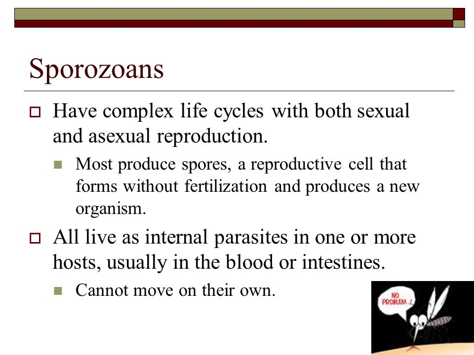 Sporozoans Have complex life cycles with both sexual and asexual reproduction.